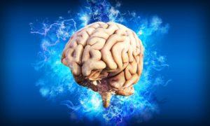 whole brain thinking